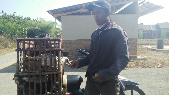 Waduh, Gara-gara Ini Omset Pedagang Ayam Turun